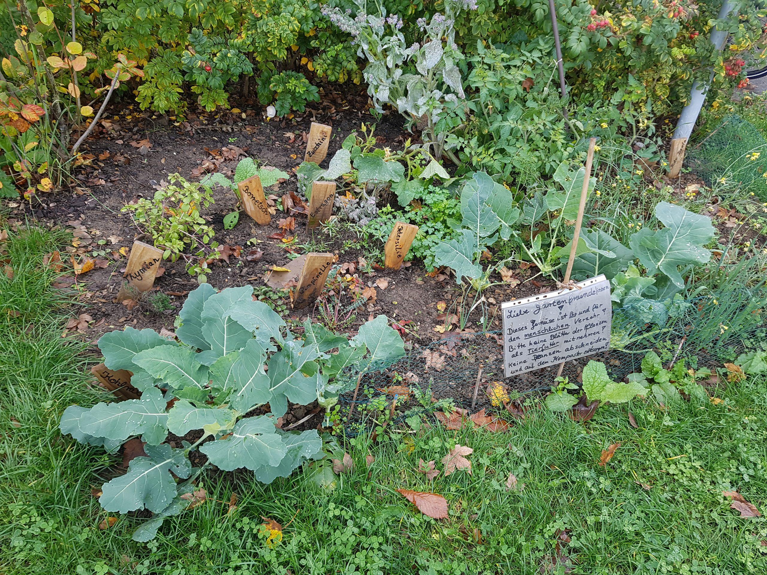 Tipp: Gemüse und Kräuter zum Ernten für jedermann